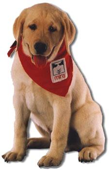 Mira Puppy